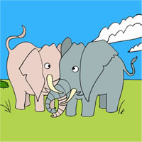 Elephants Coloring